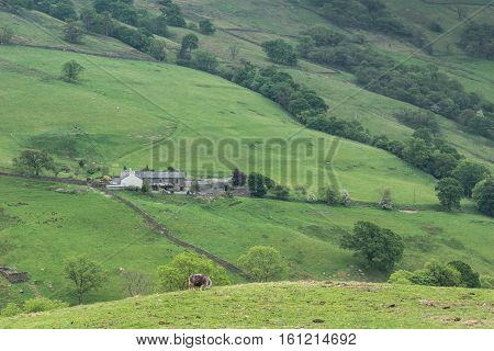 Lake District England - May 30 2012: Isolated gray farm building in midst of walled green meadows on the of mountain. Sheep in foreground. Forests and lone trees.