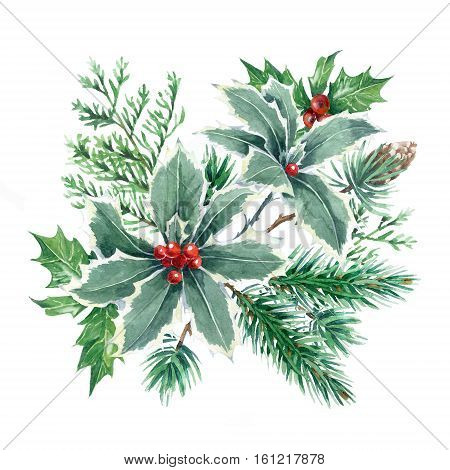 Christmas illustration. Hand drawn plants on a white background