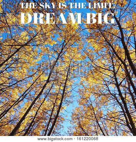 The sky is the limit. Dream big. Inspirational quote on tall autumn forest trees with golden and orange colored leaves and bright clear blue sky background.  Instagram effects