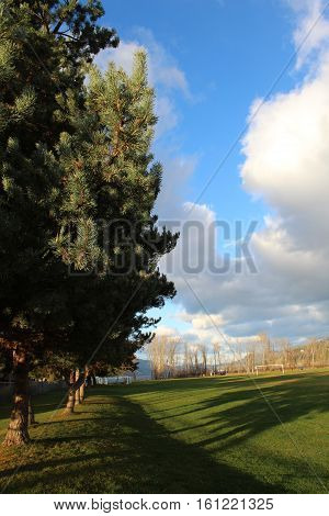 Autumn field and trees landscape.  Tall green trees along end of grass field in autumn with tall bare trees, clouds and blue sky in background.  Tree shadows on field of green grass in fall.