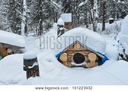 Dog house in the winter with snow on roof