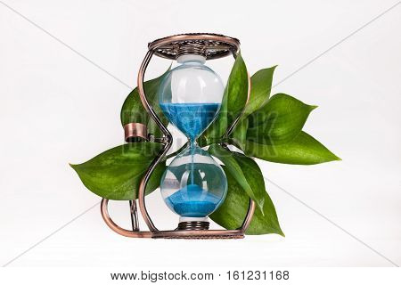Sandglass with green leaves on isolated background