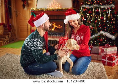 Young girl getting nice puppy from guy as Christmas gift