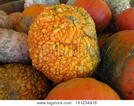 A pile of orange, white, and gnarled pumpkins, with a gnarled pumpkin in the center.