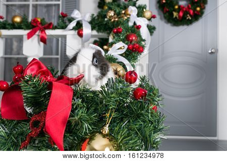 little rabbit sits under the Christmas tree.