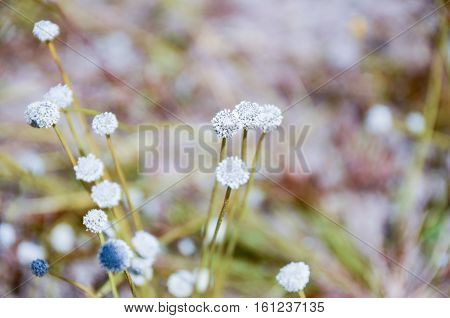 White flowers in full bloom, blur the field.