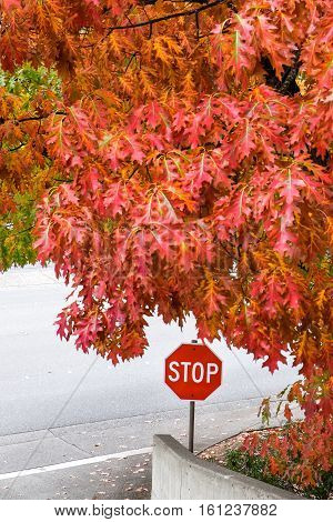 Fall color over the entry to the street, with a stop sign