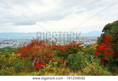 Color of Japanese's autumn forest in a very dusky day. Colorful of autumn season in cloudy morning. City of Kyoto was seen as background of the picture.
