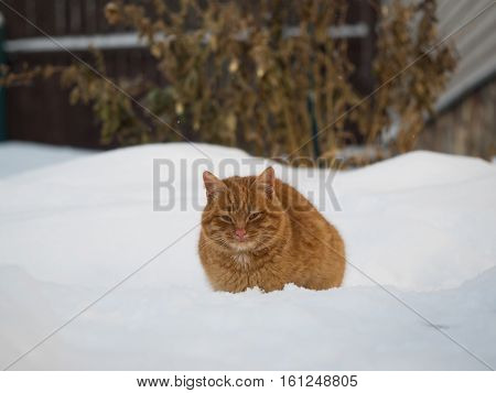Red Cat Sitting Among The Snow Drifts