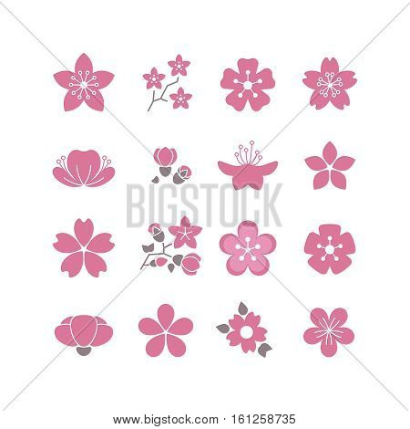 Cherry pink flower, spring sakura blossom vector icon set. Blossom sakura flower, branch of bloom sakura illustration