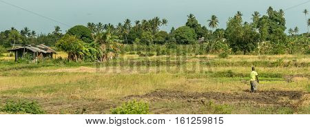 panoramic view of green field with man farming in Zanzibar, Africa