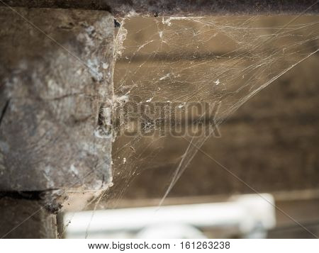 Picture of the spider web in the corner of the room close up. Close up on the spider web against the blurred background of the grey wall.