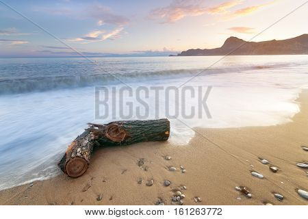 log on the shore of the beach / bright morning sunrise morning without the sun