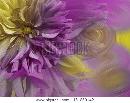 big shaggy flower Dahlia. a bright rainbow background. flower and wind. floral collage.