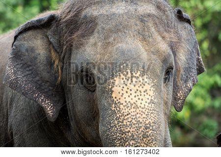 closeup shot of elephant eye, thailand .