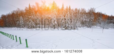 Beautiful winter sunset with trees in the snow. Twillight