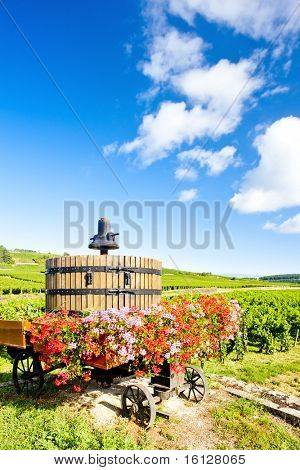 vineyards of Cote de Beaune near Pommard, Burgundy, France poster