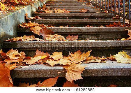 Fall autumn park. Falling leaves Colorful fall autumn park with falling leaves and sun rays.