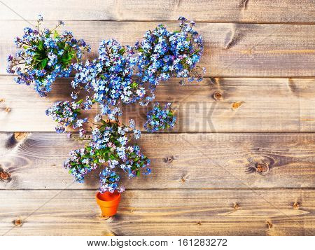 Flower on wooden background. Bunch of small blue forget me not flowers with flowerpot. Springtime. Copy space. Top view flat lay