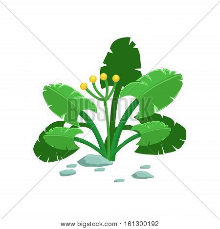 Broad-Leaved Tropical Jungle Plant Natural Landscape Design Element, Part Of Scenery In Nature Landscaping Constructor. Detailed Cartoon Vector Objects For Land Surface Constructing.
