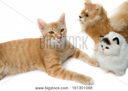 cat cute and doll beautiful on white background