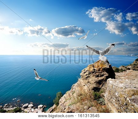 Three seagulls over the sea and mountains