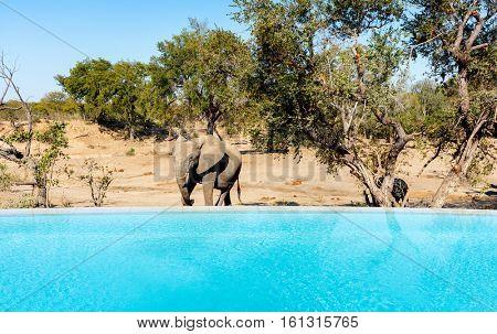 Pool view on luxury safari with elephants roaming around