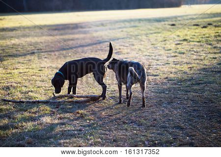 Dogs sniff at the butt, in a meadow