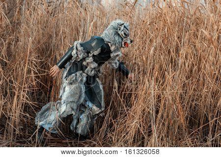 Man wolf werewolf sneaking through the tall grass.