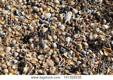 Beach shells on the sand background by the ocean surf