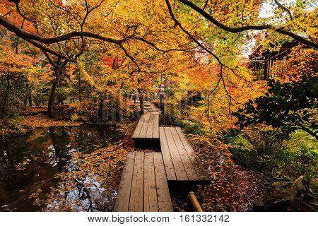 Tenju-an Temple With Autumn Garden, Kyoto