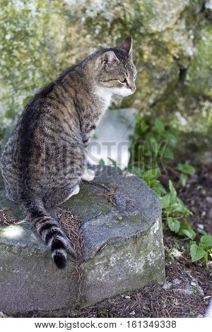 Cat Sitting On A Rock Backwards And Watching In Forest.