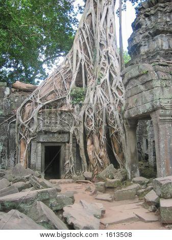 Banyan Tree Over Old Ruin Temple, Ta Prohm, Bayon, Angkor Tom, Cambodgia