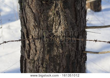 shot of barbed wire ingrown to tree
