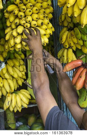 Man Taking Bananas At A Market, Kandy, Sri Lanka