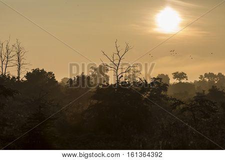 Udawalawe National Park in Sir Lanka, Asia.