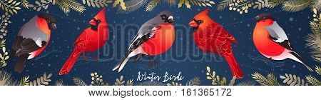 Set of winter birds. Cardinal and Bullfinch. Vector illustration for Christmas and New Year's greeting cards invitations media banners printed material design