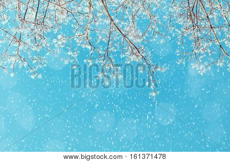 Winter landscape - snowy branches of the winter tree on the background of the sunny sky under winter snowfall. Winter nature background with free space for text. Winter snowy scene