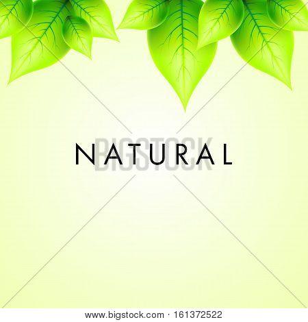 Vector Natural Design Green Leaves Illustration Background