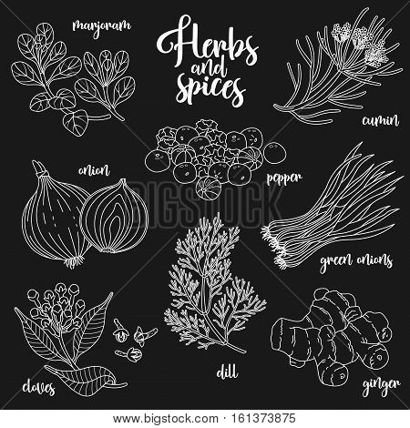 Spices and herbs vector set to prepare delicious and healthy food. Contour botanical illustration on dark background with marjoram, onion, cloves, pepper, cumin, ginger, green onions, dill.