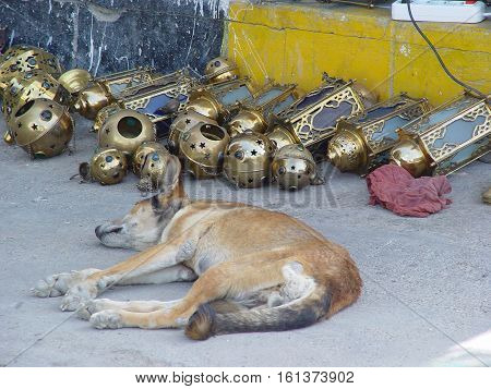 very hot weather though for dogs,arabic siesta