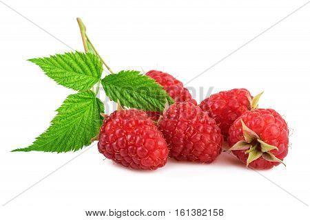 fresh raspberries organic raspberry with leaf isolated on white