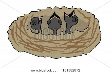 Three hungry black nestlings in the nest. The nest from brown twigs.
