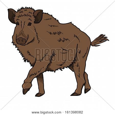 The brown boar on  the white background.