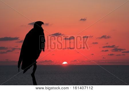 The magnificent silhouette of the African Fish - Eagle over the flaming horizon. Magic sunset over the river Zambezi