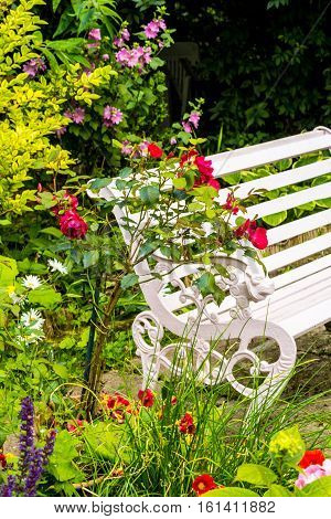 Beautiful romantic home garden with variety of blooming flowers summertime and red rose bush and white bench