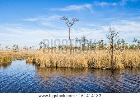 Winter at Mackay Island National Wildlife Refuge located on Knotts Island in North Carolina with brown reeds in swamp.