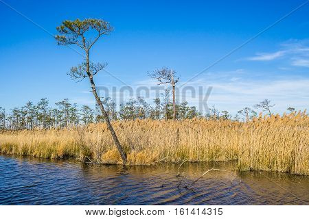 Mackay Island National Wildlife Refuge located on Knotts Island in North Carolina.