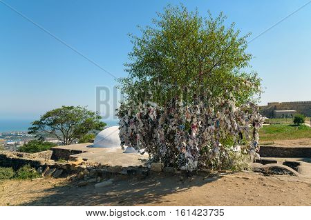 Wish Tree In The Naryn-kala Fortress. Derbent