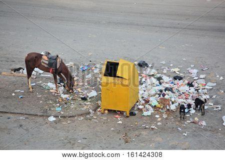 Rubbish-bin and garbage around